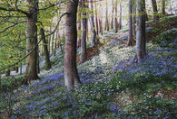 Keith Melling Bluebells and Ramsons