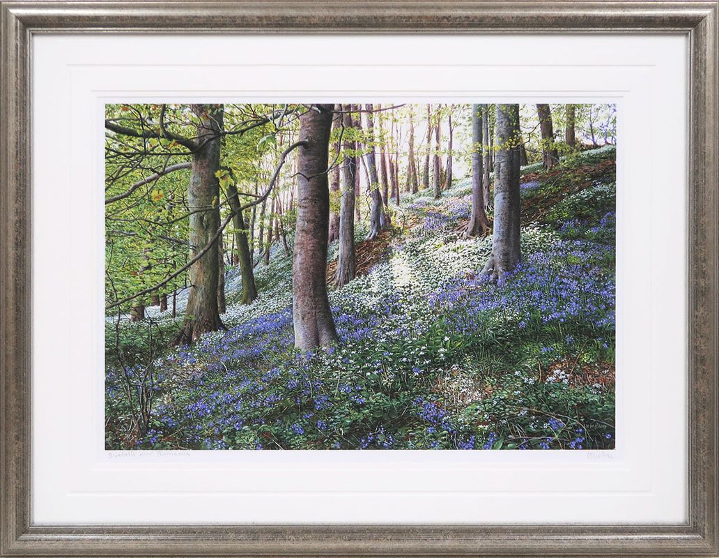 Bluebells and Ramsons  signed print by Keith Melling